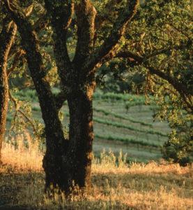 BG-BELOW-THE-TREES-web
