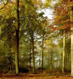 BG-FOREST-EVENING-web