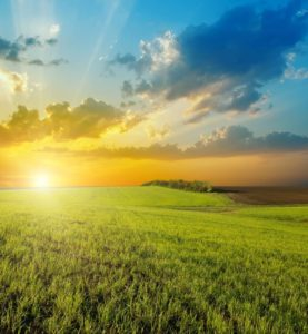 BG-sunset over agricultural green field